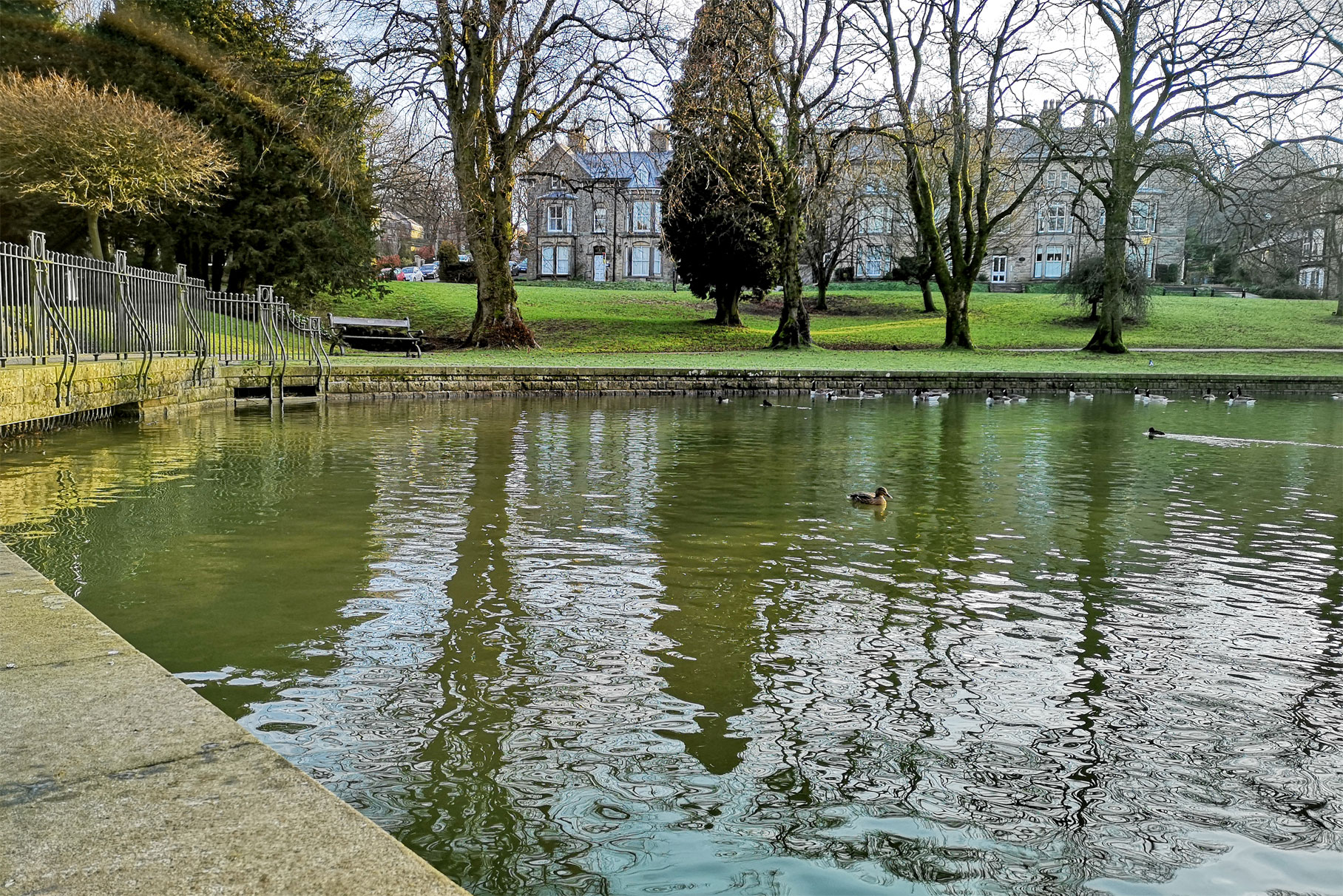 Derby House - Pond